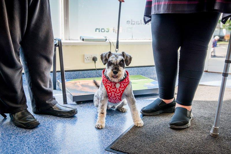 cute dog in Coastway Vets Woodingdean