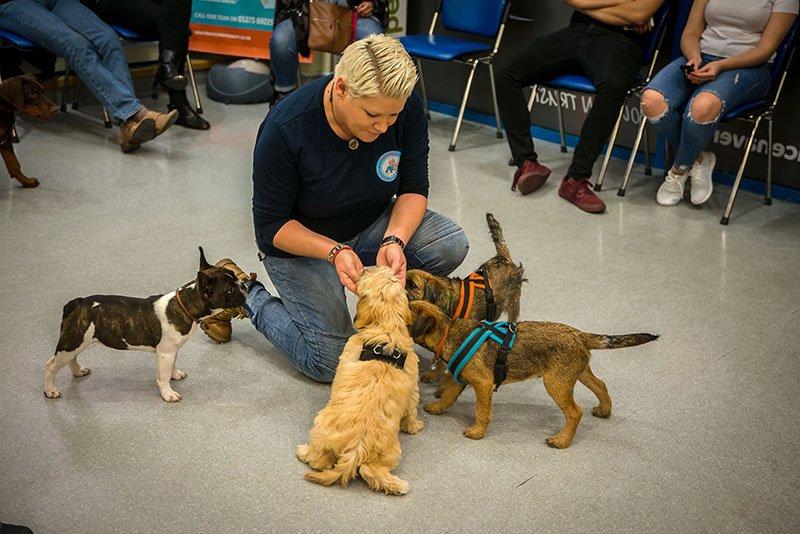 Puppy behaviour class in full swing